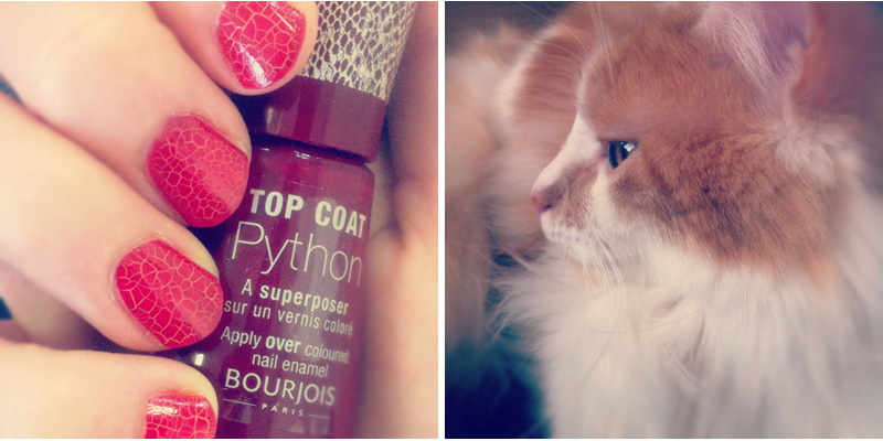 Bourjois top coat Python
