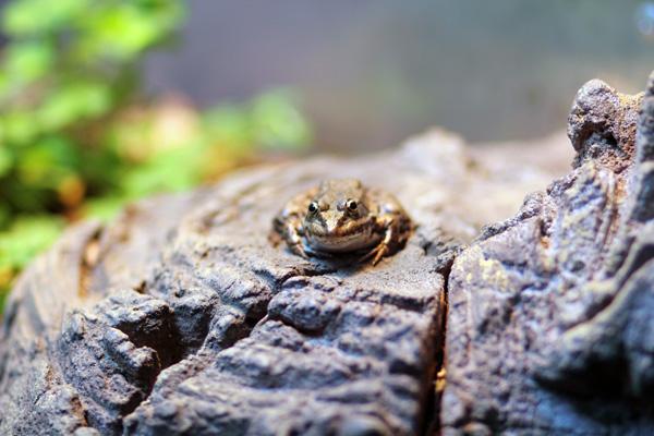 grenouille zoo de vincennes