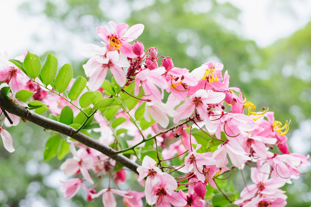 fleurs île maurice