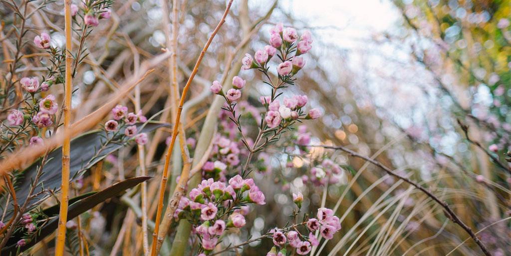 Dans le secret des Jardins Weleda