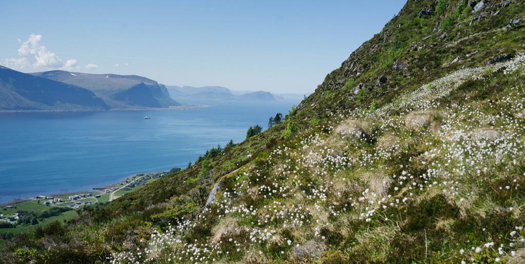Norvège #2 : Ålesund et Godøy
