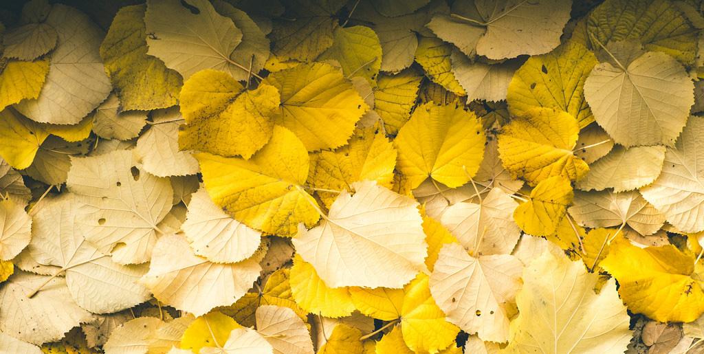 L'automne au Jardin du Luxembourg – Un lieu, quatre interprétations