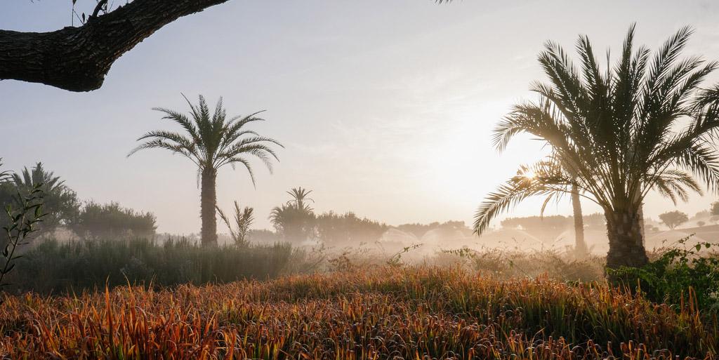 Royal Palm Beachcomber Marrakech