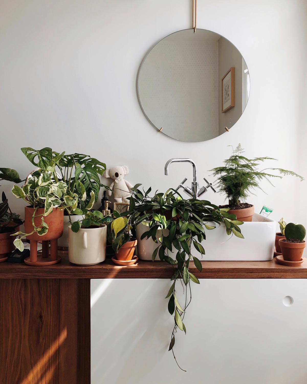 Plante Pour Salle De Bain Sombre s'occuper de ses plantes d'intérieur : conseils pour les