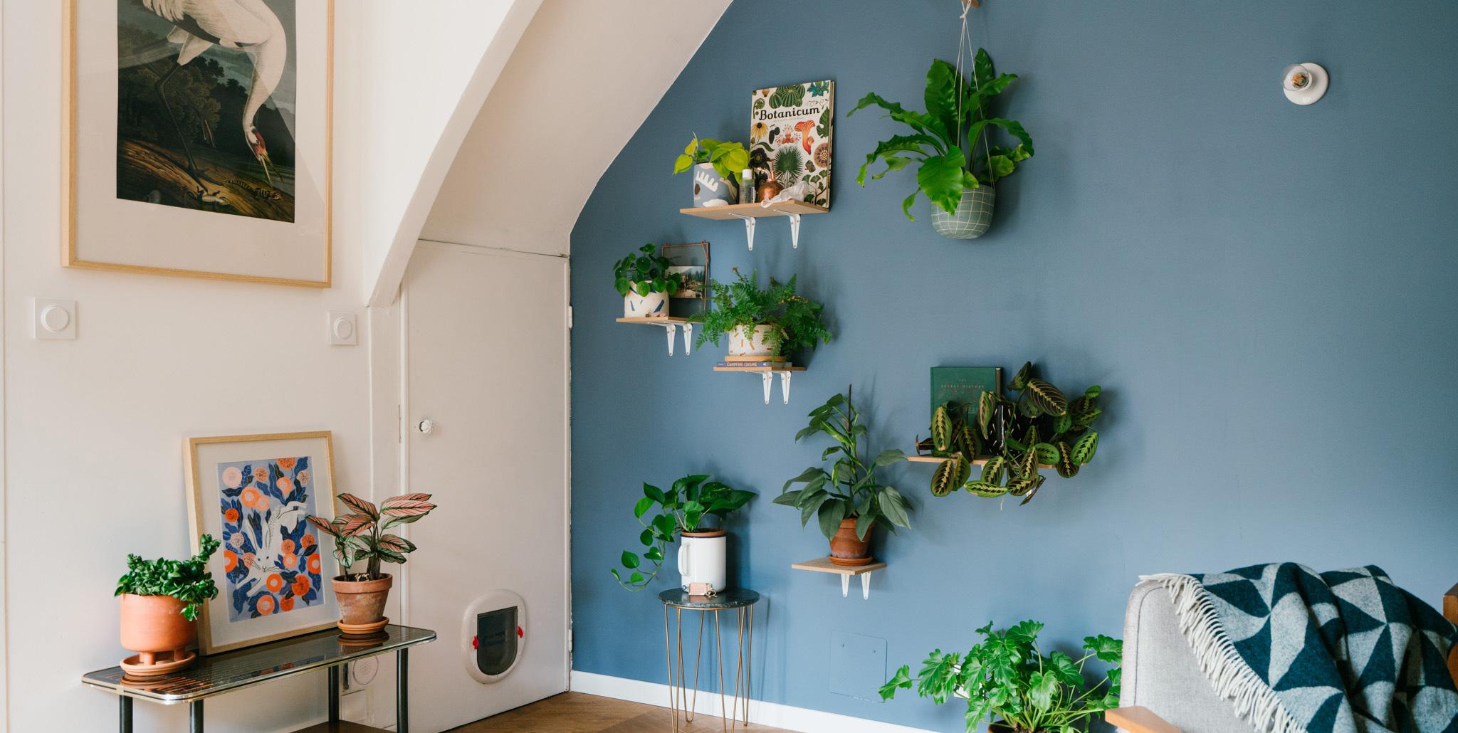 Ma collection de plantes – édition septembre 2020